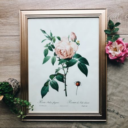 Cadre Redouté Rosa Indica fragans